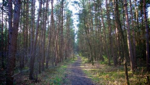 german forest path